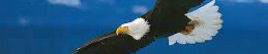 cropped-free-eagle.jpg